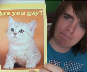 funny, gay, and kitty image