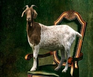 goat, weird, and ironic image