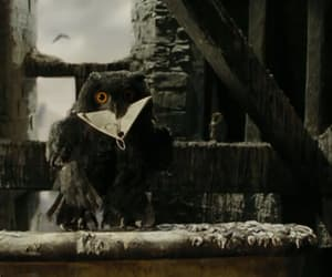 black, harry potter, and owl image