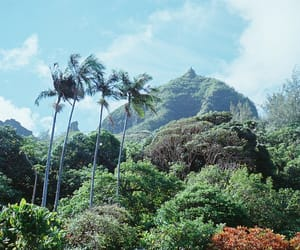 climate, hawaii, and summer image
