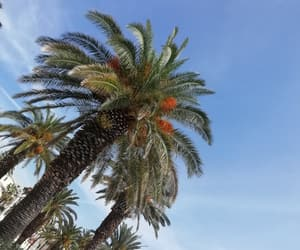 croatian, palm, and tourism image