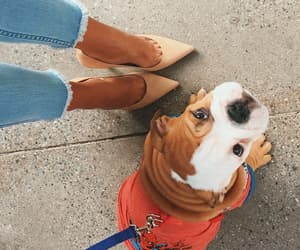 dog, puppy, and heels image