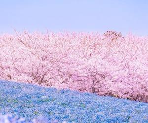 beautiful, blooming, and japan image