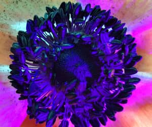 flower and macro image