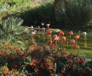flamingo, aesthetic, and nature image