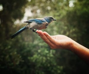 bird, hand, and nature image