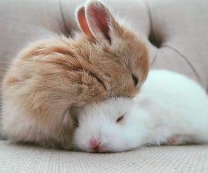 animal, inspiration, and rabbit image