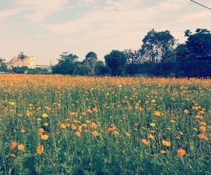 field, orange, and flowers image
