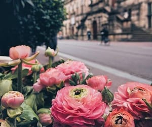flowers and city image