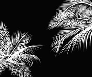 background, black, and white image