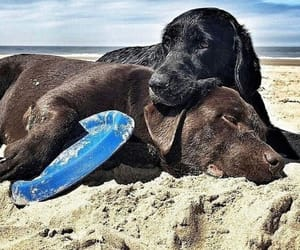 beach, dog, and tired image