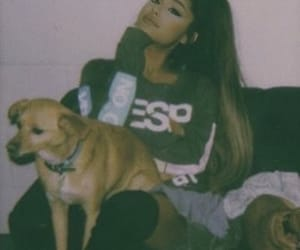 icon, dogs, and ariana image