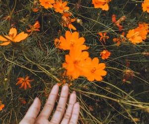 blossom, flowers, and orange image