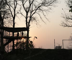 late afternoon, silhouette, and trees image