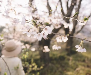 blossom, nature, and photo image