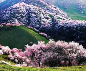nature, flowers, and china image
