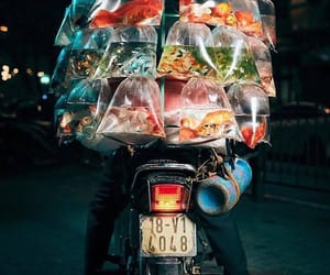 fish, Vietnam, and hanoi image