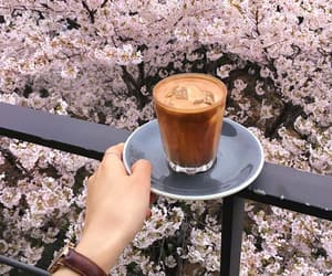bloom, blossom, and coffee image