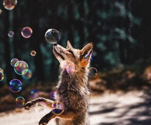 fox, animals, and bubbles image