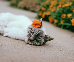 aesthetics, animal, and cute image