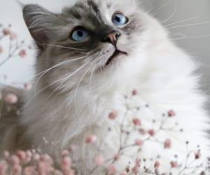 cat cats, fabulous, and fashion image