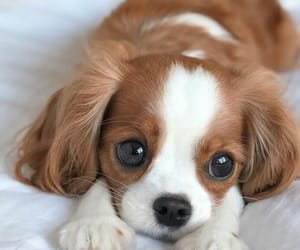 animal and pet image