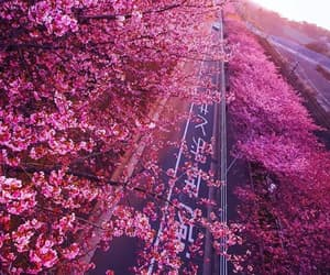 cherry blossom, day, and flowers image