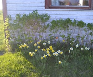 cottage, country side, and flowers image