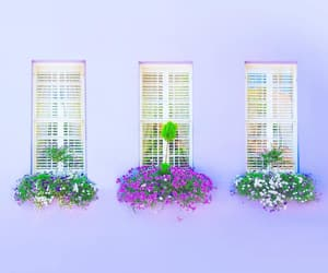 facade, flowers, and lilac image