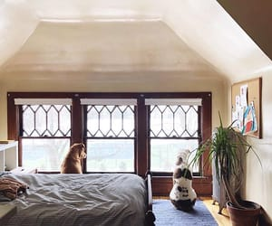 bed, home, and dogs image