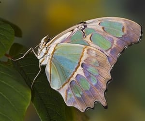 butterfly and green image