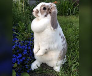 animals, bunny, and flowers image