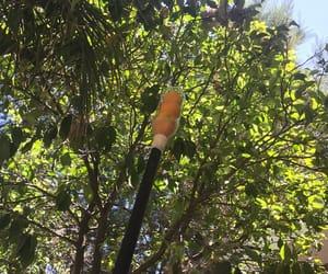 calor, orange, and pet image