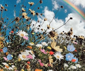 flowers, plants, and rainbow image