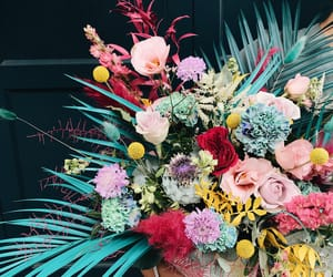 flowers, roses, and tropical image