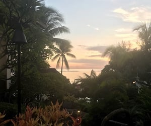 beach, Island, and palm trees image