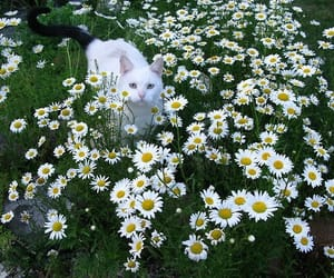 cat, flowers, and daisy image