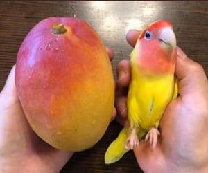 manga, mango, and yummy image