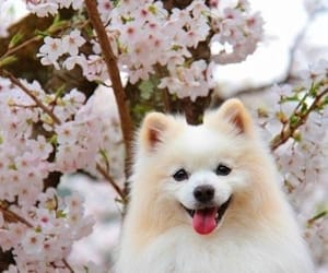 adorable, animals, and cherry blossoms image