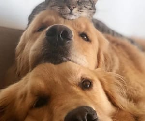 animal, pet, and cat image