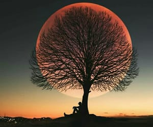 arbol, atardecer, and mundo image