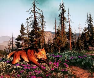 afternoon, animal, and fox image