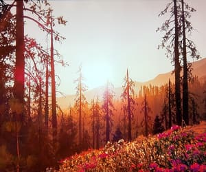 bright, orange, and outdoors image