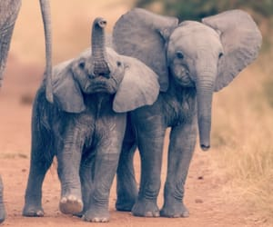 animal, baby, and elephant image