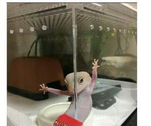 animal, lizard, and world image