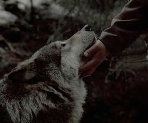 aesthetic, photography, and wolf image