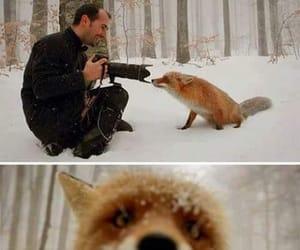 animal, animals, and fox image