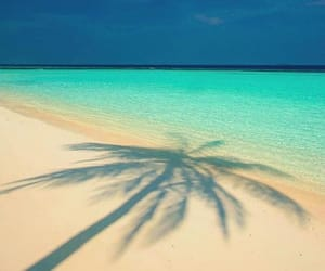 beach, summer, and palms image