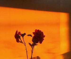 orange, aesthetic, and flowers image