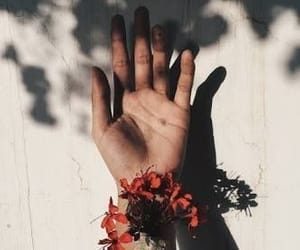 flowers, hand, and tumblr image